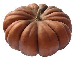 Musqué de Provence Bio  -1 kg