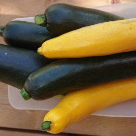 Courgette longue JAUNE- 1kg-PREVU MI JUIN-