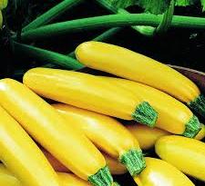 producteur-courgette-longue-jaune-ariege