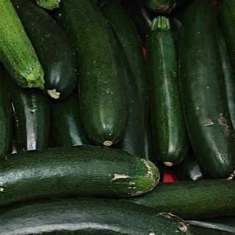 producteur-courgette-longue-verte-ariege