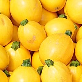 Courgette ronde JAUNE-1 kg-