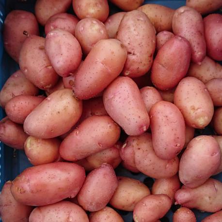 producteur-pomme-de-terre-rosabelle-ariege