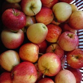 Pomme Gala  1 kg