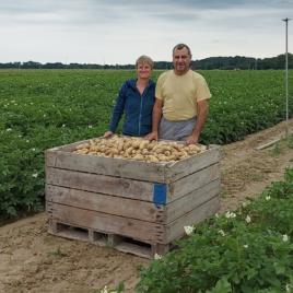 Pomme de Terre  ARTEMIS- VRAC-0.80 € le kg